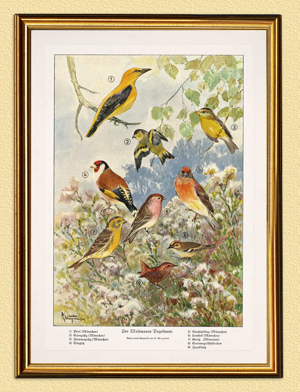 Des Weidmanns Vogelkunde Steinadler Schlangenadler Wilderer A3 443 Gerahmt