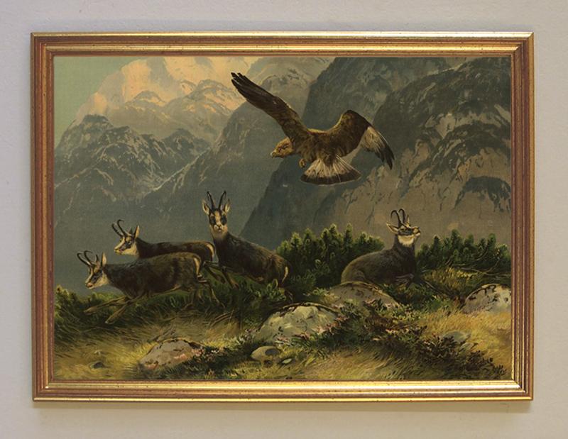 Jägerbild Störenfried Jagdbild Adler Gemsen Gams Greifvogel Wilderer A3 019